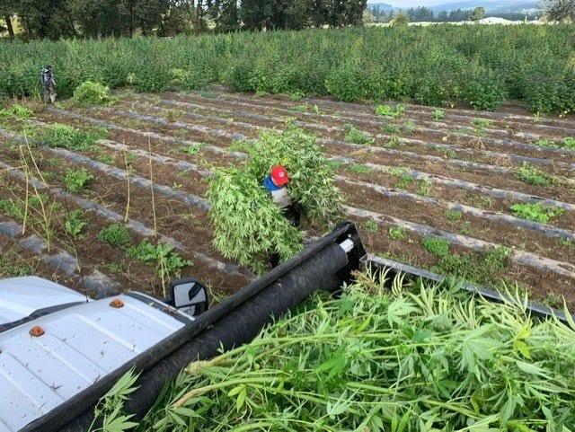 primo nutraceuticals crop farming