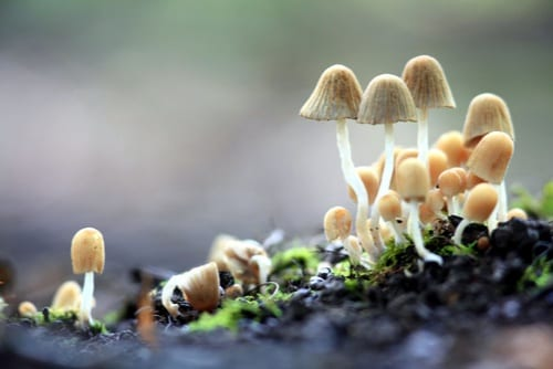 small mushrooms in nature
