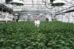 Alan Brochstein on Investing in Cannabis Stocks