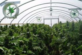 Business Agency for Cannabis Seeks Transparency