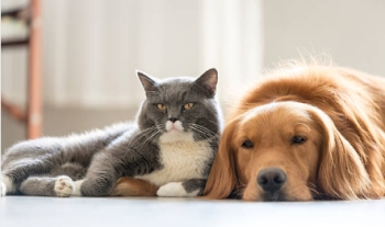 Pharmaceutical Pet Market Could Reach $69 Billion by 2020