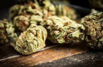 aurora-cannabis