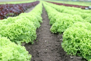 How to Invest in Agriculture